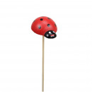 Wooden ladybug to Plug, diameter 3.5cm